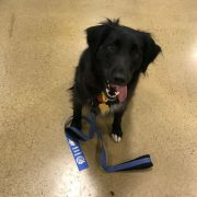 Porter - dog for animal-assisted play therapy